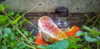 THE PERFUMER'S APPRENTICE CITRUS PUNCH